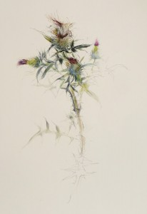 SUSAN MAXFIELD, Plein Air Thistle - 5 Stages of Bloom; Charcoal, watercolor, gouache, pencil, ink; $2,000