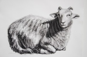 CAROLINE LETVIN, Sleepy Sheep #1; Charcoal, compté; 43 x 29 inches; $850